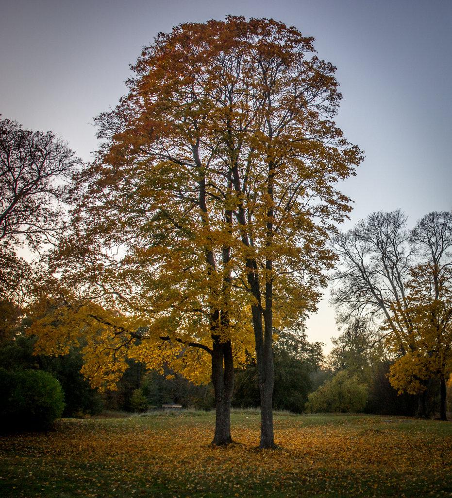 Autumn in Stochkolm